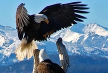 Aves <3 Birds ~ Eagles / by Jazmin Tully