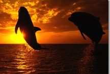 Sealife <3 / by Jazmin Tully