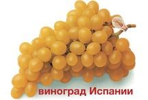 Grapes form Spain / В долине Виналопо (Аликанте - Испания) есть уникальный виноград.Виноград созревает в бумажный пакет. Улучшение вкуса, цвета и могут быть съедены летом фрукты в зимние месяцы.  #мешки столового винограда (Испания)