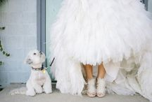 Puppy Love / Dogs at weddings ~ a whole lot of cuteness