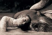 GREGORY COLBERT - FHOTOGRAPHER