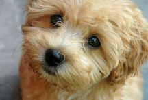 Future dog!
