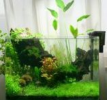 freshwater aquarium / aquascapes and tanks, mostly nanos + other related pictures, betta, shrimp & snail care