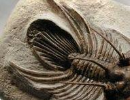 paleontological