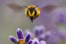 Apis, and Vespa Vulgaris! Bees, and their asshole cousins! / by Jim