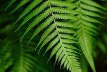 fern love