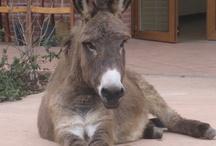 Donkey / Lucio in Alzheimer's center