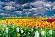 Nature & Gardens Atmospheres