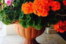 Gardening / Love gardening