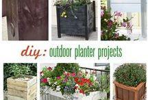 Pflanzen / Pflanzen - rund um den Garten