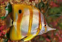 Onder de waterspiegel / Een kleurrijke wereld onder water. De foto's zijn allemaal repins van andere borden. #scuba #diving