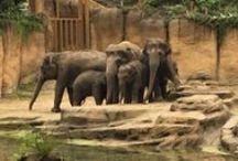 Wildlands Adventure Zoo Emmen. / Foto's van de bouw van theater en de nieuwe dierentuin in Emmen. Opening maart 2016.