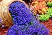 Tuinieren. / Tuinieren in een kleine tuin. Wat heb je nodig? Hoe pak je het aan?