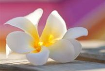 Lovea Bio biologische zonnecreme / Zonnecrème van Lovea Bio.  Het bevat natuurlijke minerale zonfilters, Ingrediënten o.a. arganolie, kokosolie en vitamine E. Goede zonbescherming en betaalbaar. Verkrijgbaar bij Zonnestudio Rietlanden in Emmen.