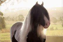 The pony brigade