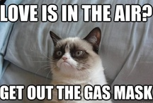 Cats! purrrr love^^