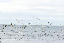 la mer / by ilona bryszak