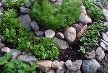 Gardening/Yard Projects
