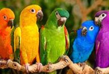 AVIATORS ~ BIRDS / All About Birds  / by Val Simich