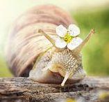 Animals: Snail