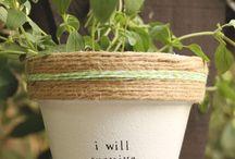 Pflanzen ✨