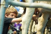 FarmCamps Hoeve Sonneclaer, Drenthe / Boer Barend laat je graag zien wat er allemaal op de deze biologische melkveehouderij te vinden is. En boerin Tineke heeft in de ijswinkel lekkere boerenijsjes voor je, of laat je zien hoe je echte boerenvla maakt. Ook vind je twee pony's, schapen, geiten, een alpaca en vele kippen en konijnen op de boerderij.