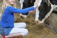 FarmCamps Kids  / Een van de doelstellingen van FarmCamps is om ieder kind weer eens een weekend op de boerderij te laten beleven. Voor even deel te laten zijn van het authentieke boeren leven. Heb je een foto van je kind op een FarmCamps boerderij? Zou super zijn als je die met ons wilt delen! Hooi Hooi!