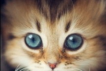 Felines...