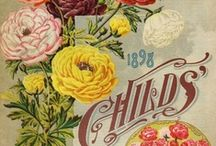 Vintage Seed Packets / by Jan Fox