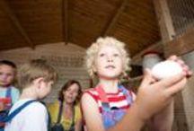 FarmCamps t' Oortjeshek  / Gezellige melkveehouderij midden in het Groene Hart. Kamerik in Provincie Utrecht. Hier logeer je bij Wibe & Hendrika van vliet, midden op het weiland in een stoere safaritent. Glamping bij de boer! Een ideale plek voor een actieve boerderijvakantie voor jong & oud.