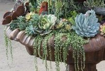 Gardening with Succulents / by Jan Fox
