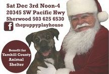 Fundraisers and Events / Holiday events, animal charity fundraisers, etc.