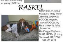 Rescues & Foster Dogs / Dogs we have rescued and/or fostered