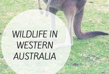 Western Australia / Places to see in Western Australia