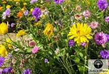 Jardin et Terrasse / Au cœur des grandes villes, il est essentiel de bien profiter de sa terrasse ou son jardin. Afin de l'aménager, de le végétaliser comme vous le souhaiteriez, Jardins de Babylone vous conseille et vous aide à magnifier votre extérieur pour mieux y respirer.