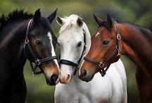 Beautiful Horses / by Rhonda