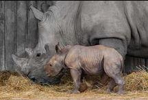 Rinocerontes en Cabarceno, Cantabria, Spain