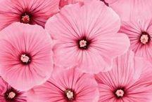Só rosa / A cor rosa flor,  casa, criança etc...