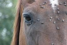 Horse Health / Conditioning, health, safety. / by Integrity Horse