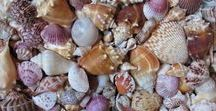 Seashells / Beautiful seashells and ideas for what to do with them