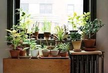 House plants and pots / by Kamee Griggs