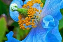 Gorgeous Flowers and Plants / Beautiful Flowers and Plants
