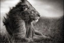 Beautiful Creatures / by Toni Garvey