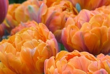 Flowers / by Susie Damm Wier Zanco