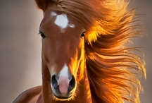 "~Horses!!~ / ""There is something about the outside of a horse that is good for the inside of a man"" Winston Churchill. Share your favorite horse pins with us here. TO BE ADDED TO MY GROUP BOARDS ===> Go to https://www.pinterest.com/tranquilwild/ and follow the directions from there."
