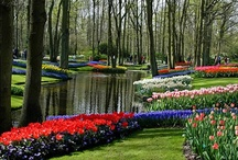 ~Beautiful Flower Gardens!!~ / Nothing revitalizes the soul like a gorgeous garden! Share your photos of beautiful flower gardens. TO BE ADDED TO MY GROUP BOARDS ===> Go to https://www.pinterest.com/tranquilwild/ and follow the directions from there.