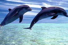 Dolphins / by Toni Garvey