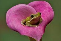 Frogs / by Mindy Wilkinson