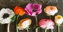 FLORAL FANTASIA / floral. bloom. fantasies.