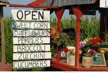 Farmstand!